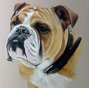 aquarel hond
