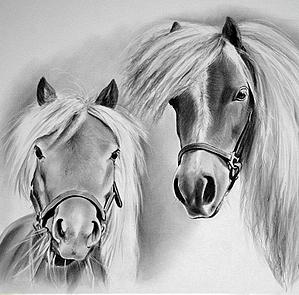 tekening paarden
